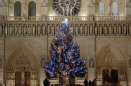 Christmas Tree in front of Notre Dame Cathedral