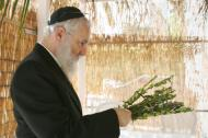 Rabbi inside a Sukkah (hut) checking myrtle branches for the holiday of Sukkot