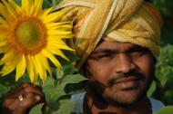 Indian Farmer with Sunflower